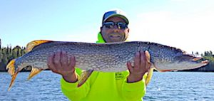 38.5-inch Northern Pike Fishing at Fireside Lodge in Canada by Steve