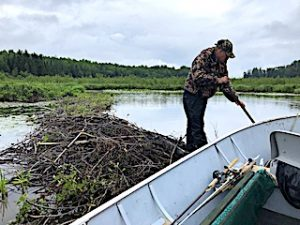 Todd Making the Way for Others Over The Beaver Dam at Fireside Lodge Fishing Adventures in Canada