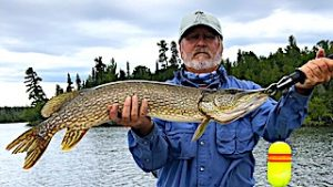 BIG Northern Pike Fishing for Musky by Gary at Fireside Lodge in Ontario Canada