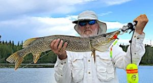 Larger Northern Pike and Muskie Fishing by Gary in Canada