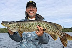 Nice Tiger Muskie Fishing by Ron at Fireside Lodge in Canada