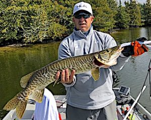 Chris with a Beauty Tiger Muskie Fishing at Fireside Lodge in Northwest Ontario Canada